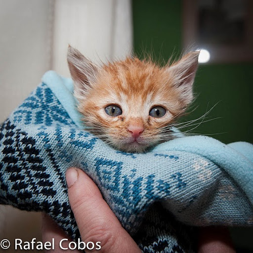 cute rescued ginger kitten
