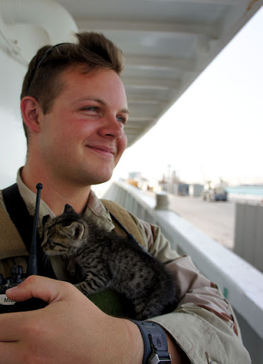 cute rescue tabby kitten cuddle navy sailor soilder