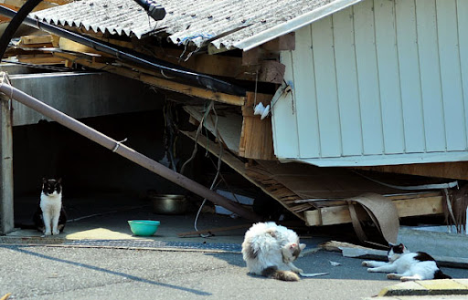cats by destroyed house after japan earthquake tsunami tashirojima island