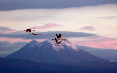 Flamingoes in the salt flats in the Atacama Desert in Chile
