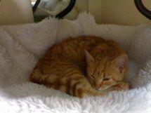 Rubi, gatita muy cariñosa abandonada en la calle. Vitoria ¡ADOPTADA! D5