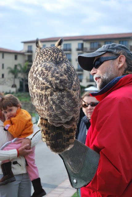 This is a photo of Paul, the Eagle Owl handler at Terranea Resort, Palos Verde, CA.