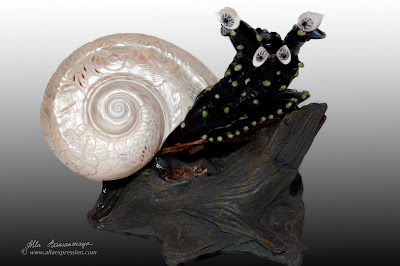 Seashell snail - mollusk