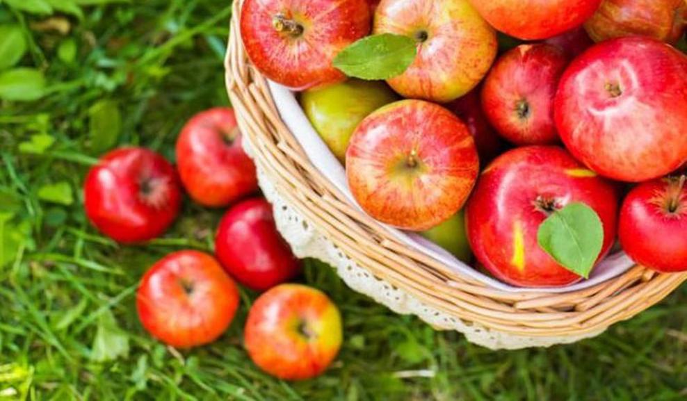 Bật mí các lợi ích mà táo nhập khẩu đem lại