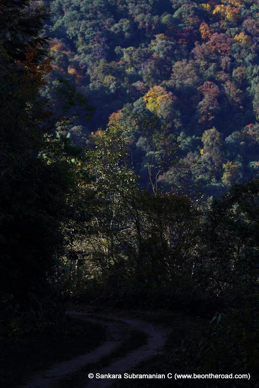 Jeep track inside Eaglenest Wildlife Sanctuary