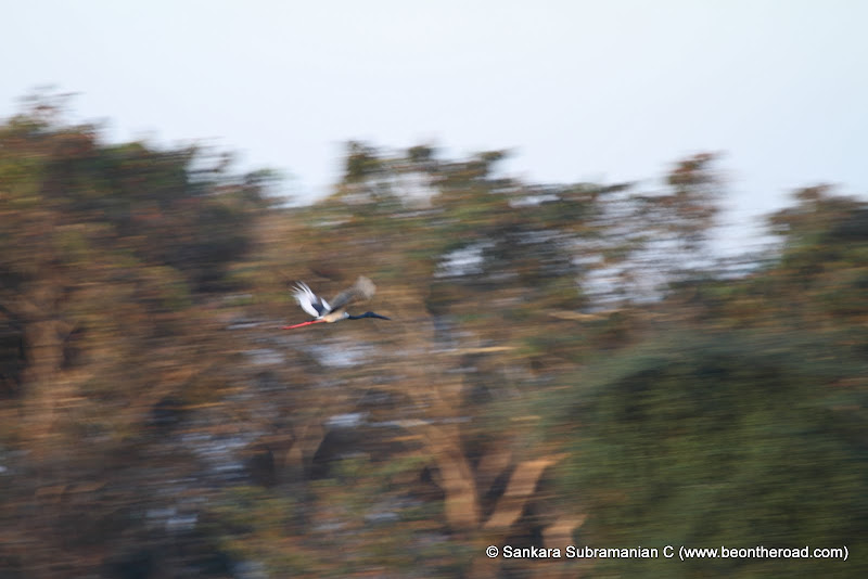 Black Necked Crane in Flight - Looks like a oil Painting
