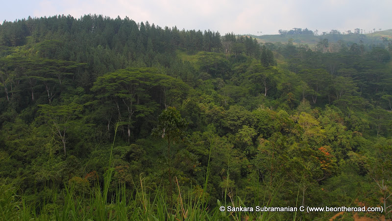 Dense Tropical Forests of Ginigathhena