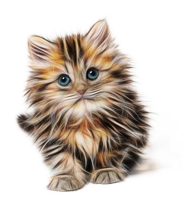 Free photo Cat Kitty Pet Domestic Kitten Animals Mammals - Max Pixel
