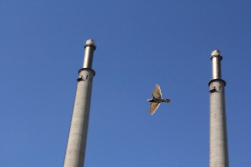 Colom al vol entre xemeneies