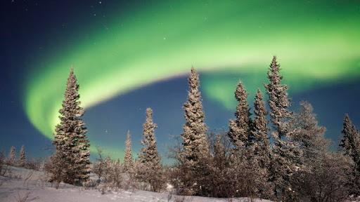 Aurora Borealis Over Boreal Forest, Alaska.jpg