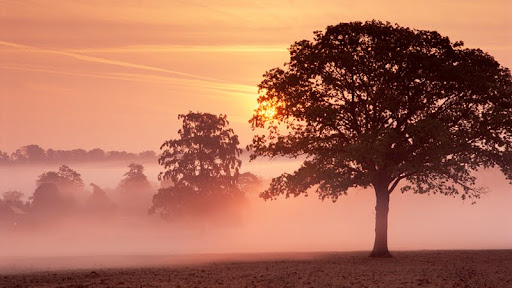Misty Dawn, Milborne Port, Dorset, England.jpg