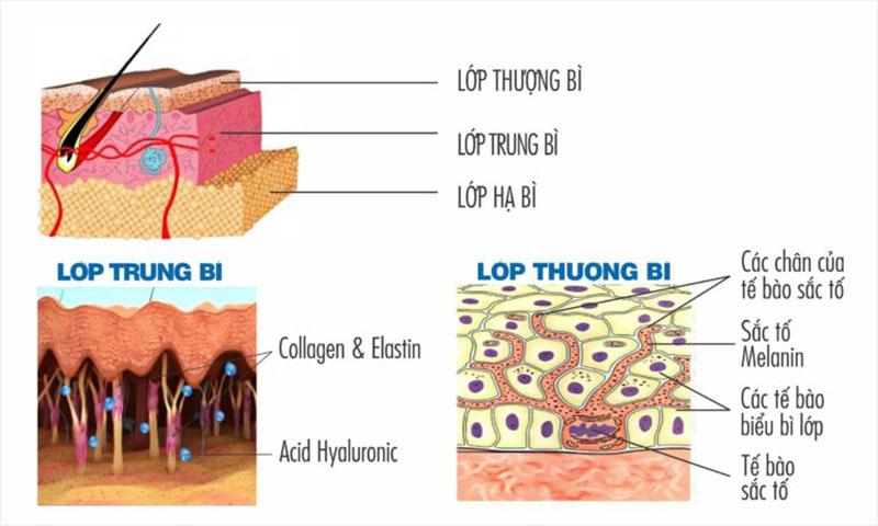 Cấy collagen tươi là phương pháp như thế nào