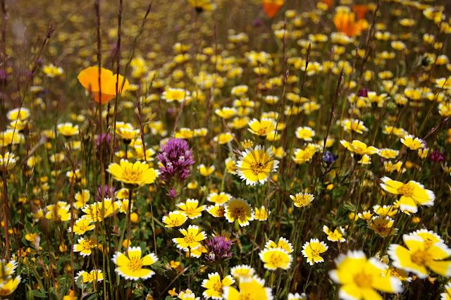 Edgewood Wildflowers