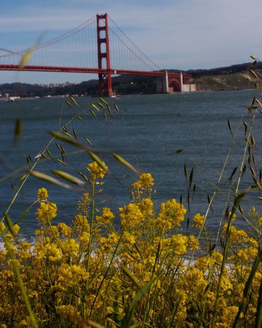 wildflower width=