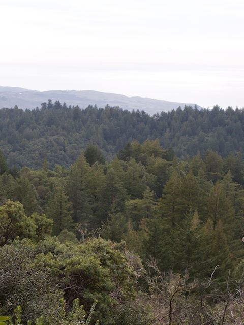 El Corte de Madera Vista Point
