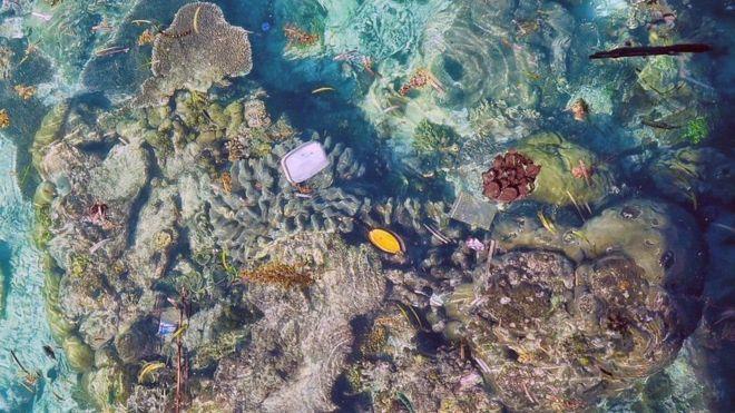 Kết quả hình ảnh cho rặng san hô rác