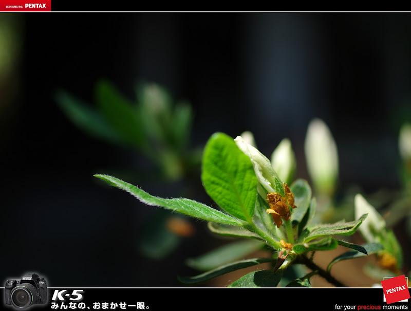 半百微植物園習拍(16P)