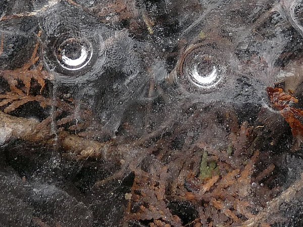 icy eyes