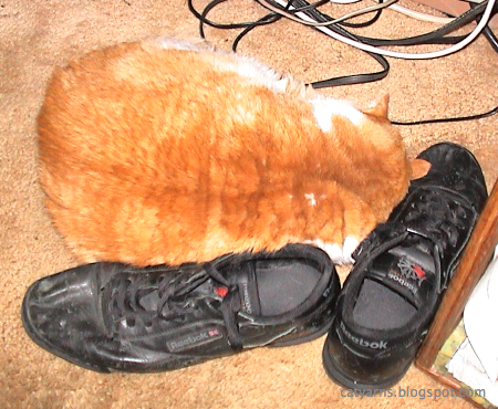 Menelaus sleeping on my shoes