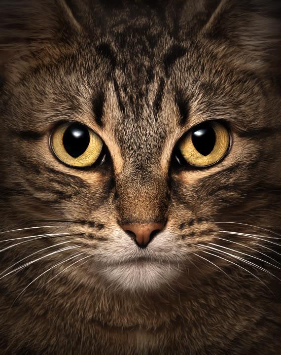 Awesome Cat Eye Photos