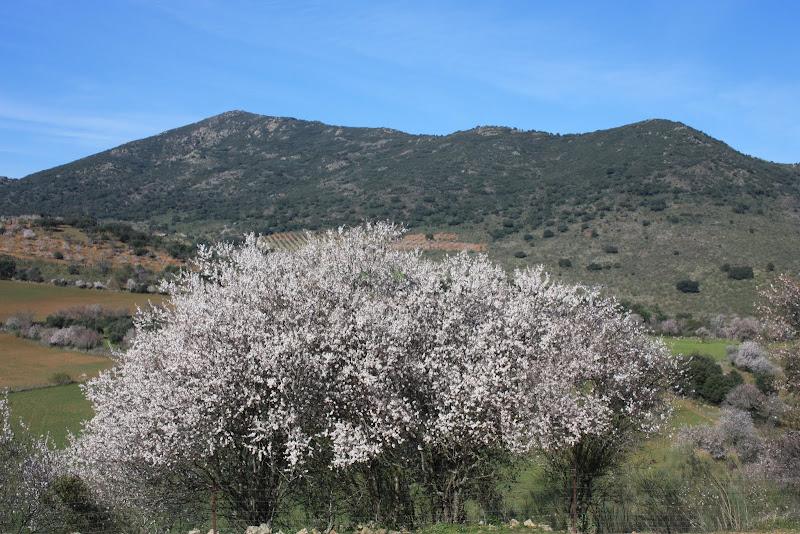 Sierra Vieja