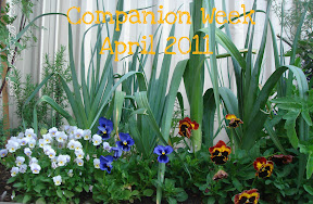 Companion Week April 2011