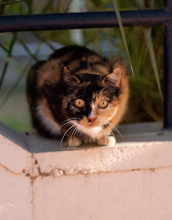 Surprised cat.