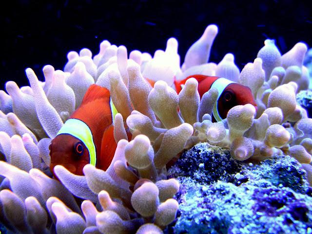 Brian's Cadlights 22g Reefing Adventure - The Reef Tank
