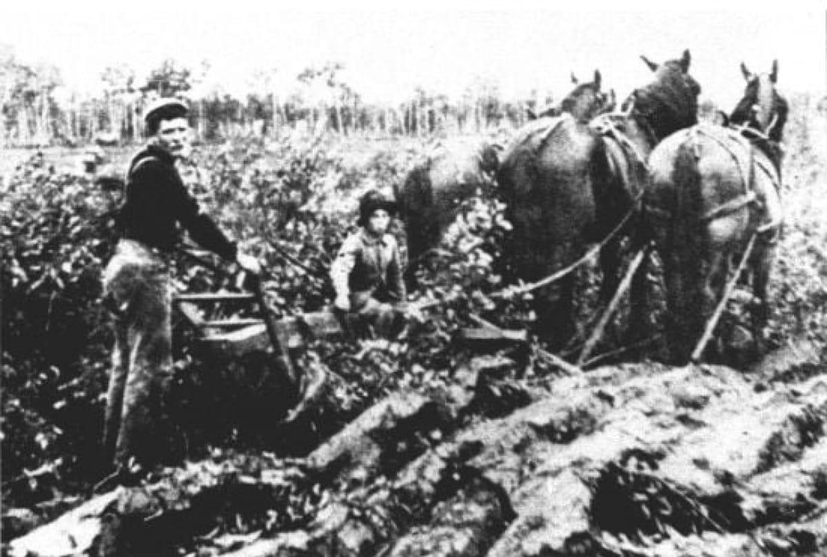 Эмигранты из Украины за работой в поле. Канада. 1904 г.