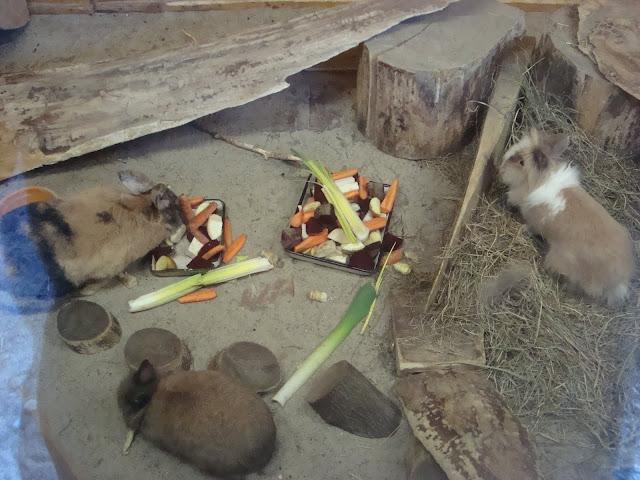 Pora karmienia królików miniaturowych trwa... cały czas!
