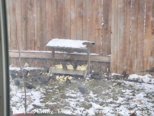 photo of a bunch of birds feeding
