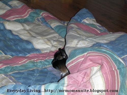 photo of Koko sleeping under a blanket