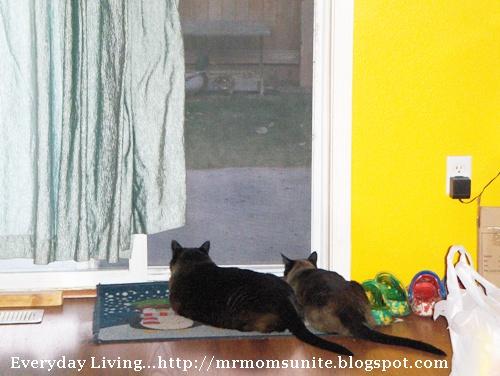 photo of Koko and Yum Yum watching the ducks eat