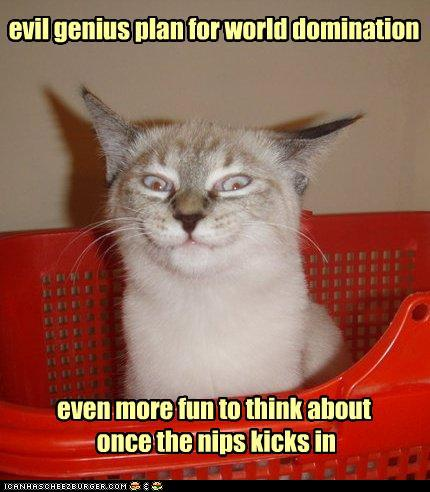 photo of a cat tipsy on cat nip