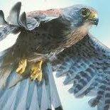 Ragadozó madarak képgyűjtemény biológia környezetismeret órákhoz