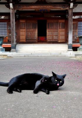 西光寺参堂に猫