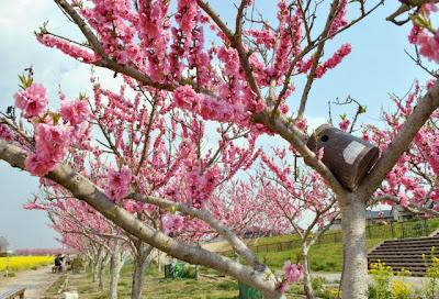 花桃の木にある巣箱