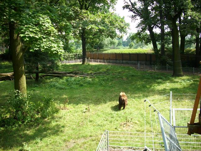 Leśny wybieg niedźwiedzi brunatnych we wrocławskim zoo