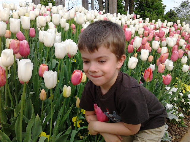 Ian loves the tulips