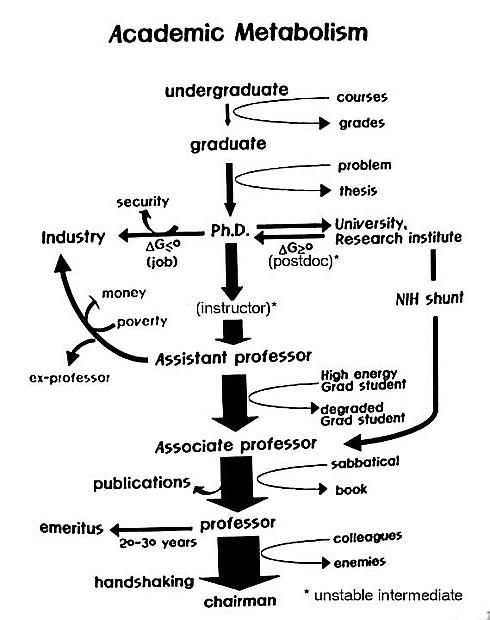 Академический метаболизм