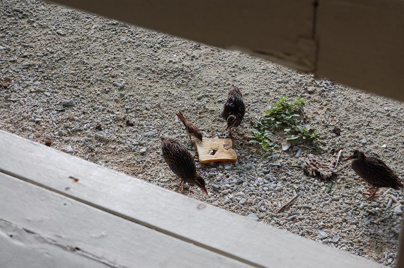 鳥に取られた食パンの写真