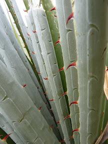Plante piquante