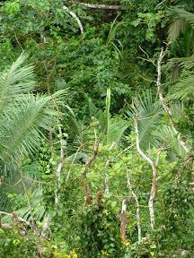 Il y a des aras verts dans cette photo