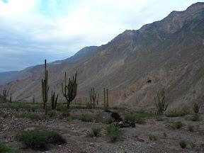 Bivouac au milieu des cactus