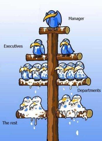 Management Flow Chart