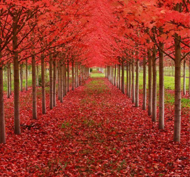 1_amazing-trees-13.jpg