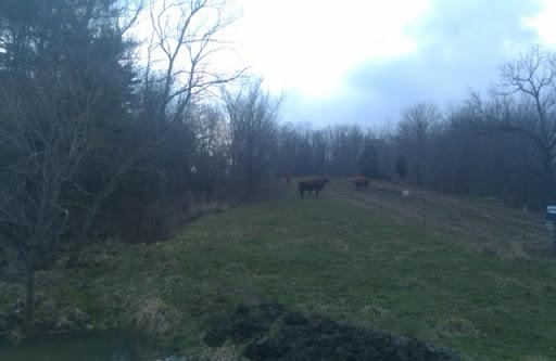 Nate Taylor herding cattle ;)