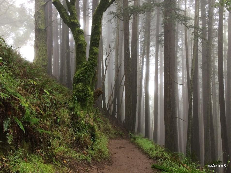 Dipsea Trail Memory Lane
