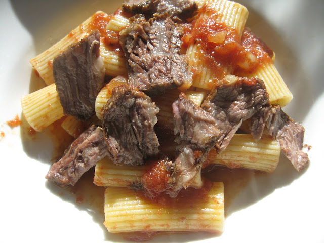 ... : final dish: large rigatoni with braised short ribs in tomato sauce