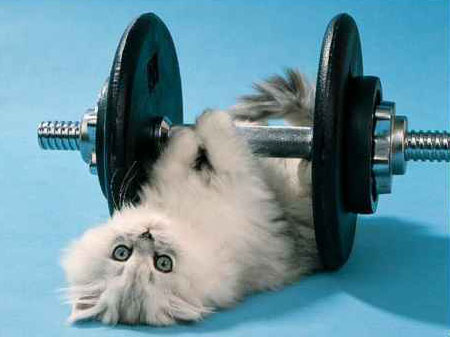 Health Tips: Exercise: exercise? no excuses
